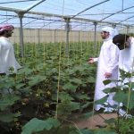Saudi Agriculture '14 gains global interest on food sustainability