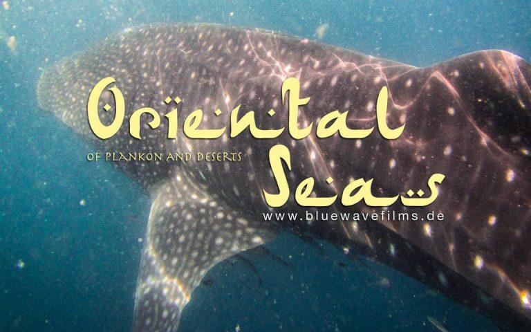 Diving Oman 2013 – Al Sawadi, Daymaniyat Islands