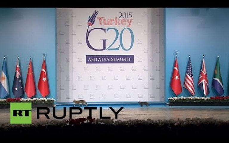 Turkey: Cats break through G20's tight security