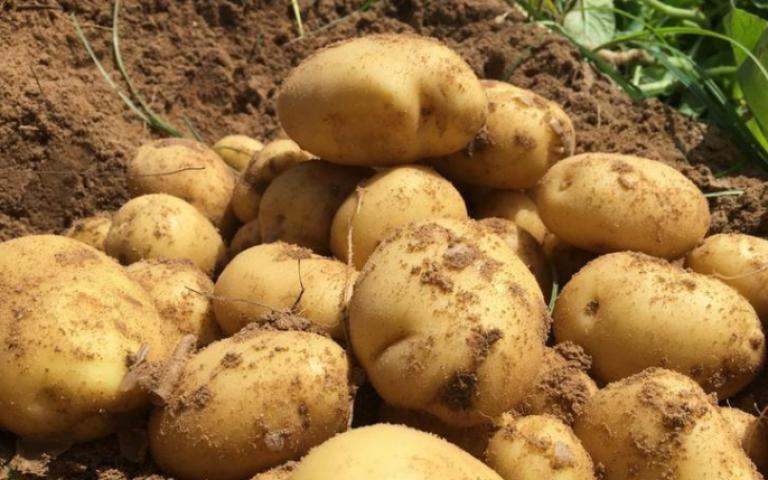 دول خليجية ترفع الحظر عن استيراد حاصلات زراعية مصرية