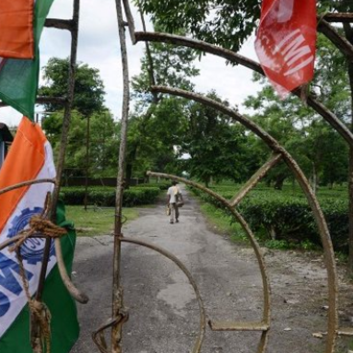 إضراب 400 ألف عامل في زراعة الشاي في الهند
