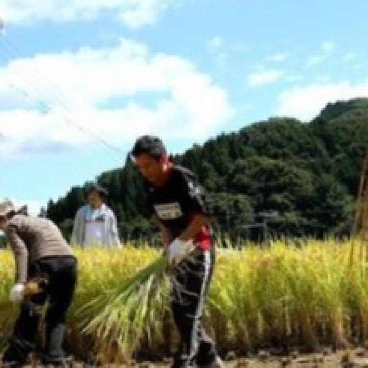 اليابان بصدد تخفيف القيود على العمالة الأجنبية بسبب النقص الشديد في الأيدي العاملة